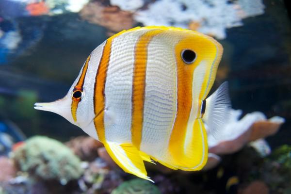 熱帯魚の飼育方法★基本から応用まで7つのまとめ
