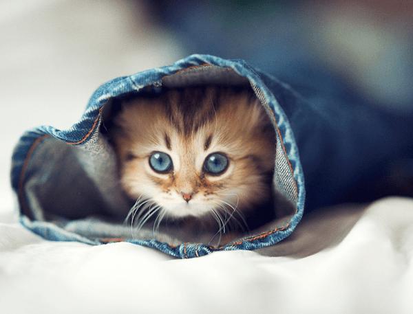 子猫の育て方で一番気を付けてあげたい7つのコト