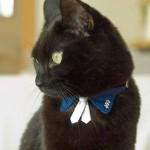 猫の首輪を買うならここがおすすめ。7つのかわいいお店