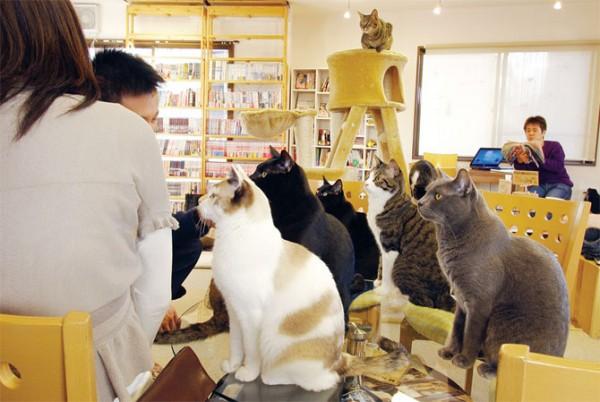 猫カフェなら福岡がアツい!7つの人気店ご紹介