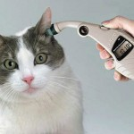 病気の猫の飼い方で知っておきたい正しい介護方法