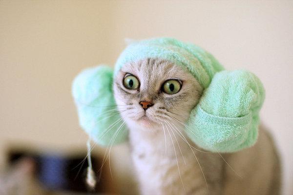面白い猫画像だけ11連発集めてみました