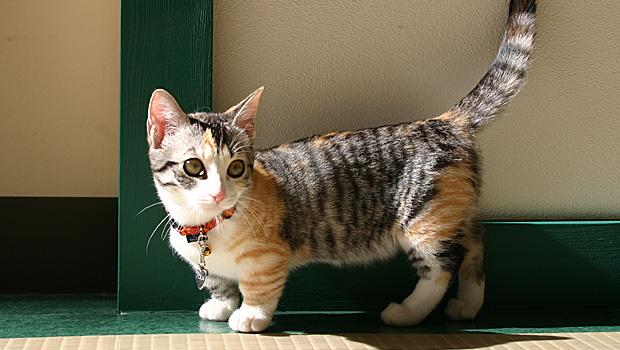 マンチカンの子猫の画像だけ11選集めました
