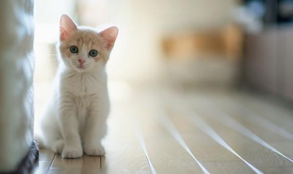 猫の画像でオススメの壁紙!シックからかわいいものまで