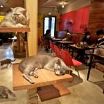 猫カフェ好きなら大阪がアツいその理由とお店をご紹介