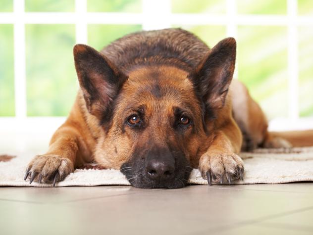 犬の名前ランキング!7つの歴史と角度で徹底検証