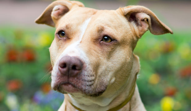 犬の販売業者の種類は様々。選ぶ時のメリット・デメリット