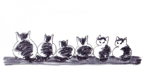 複数猫の名前を決める時に気を付けてほしい7つの事とは