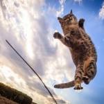 可愛い猫画像が自分で撮れる、スマホ撮影で使えるワザ☆