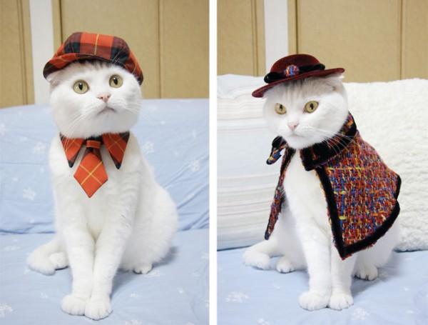猫に服を着せる時に気を付けたいポイントとは
