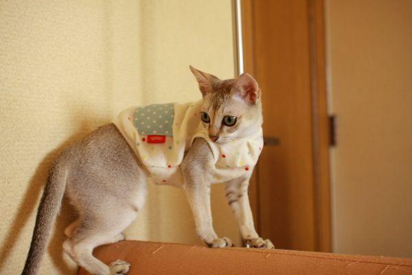 猫に服を着せるならココ。お薦めのショップ7選