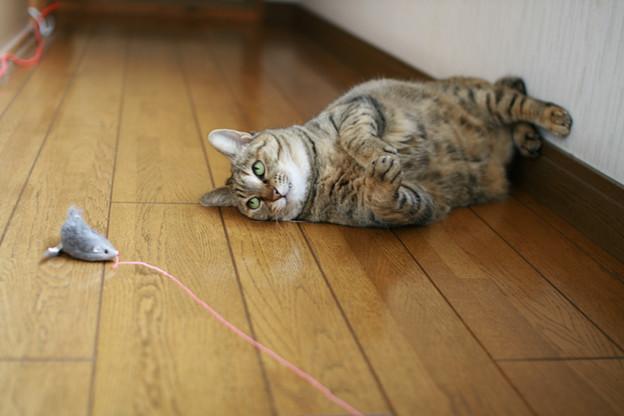 猫グッズは通販でキマリ。格安雑貨屋お薦め7選