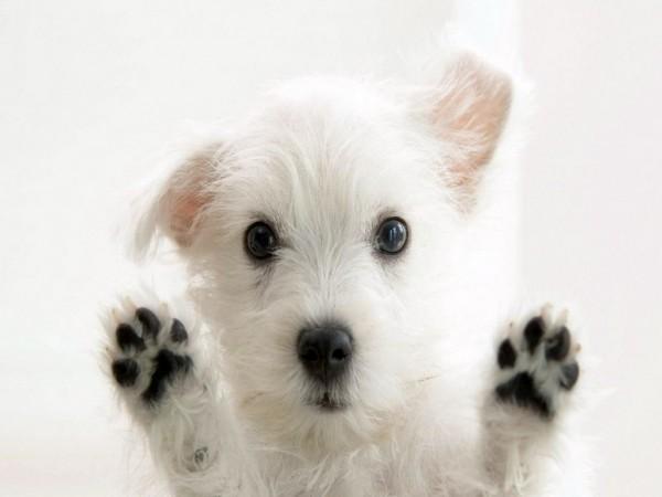 犬のグッズは進化する。お薦めしたい次世代グッズ7選