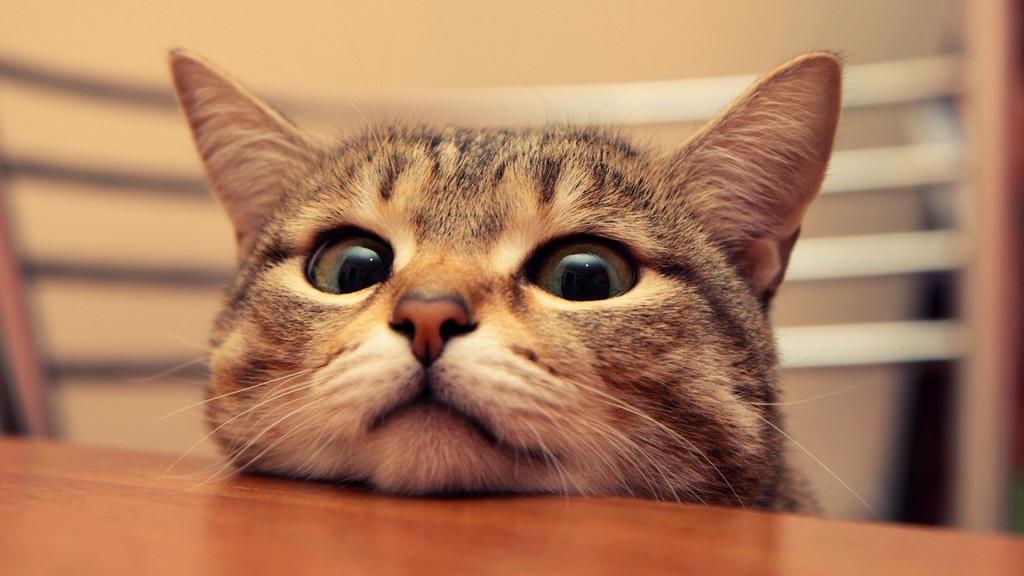 猫の名前はこうつけよう、他と変わった視点からアドバイス