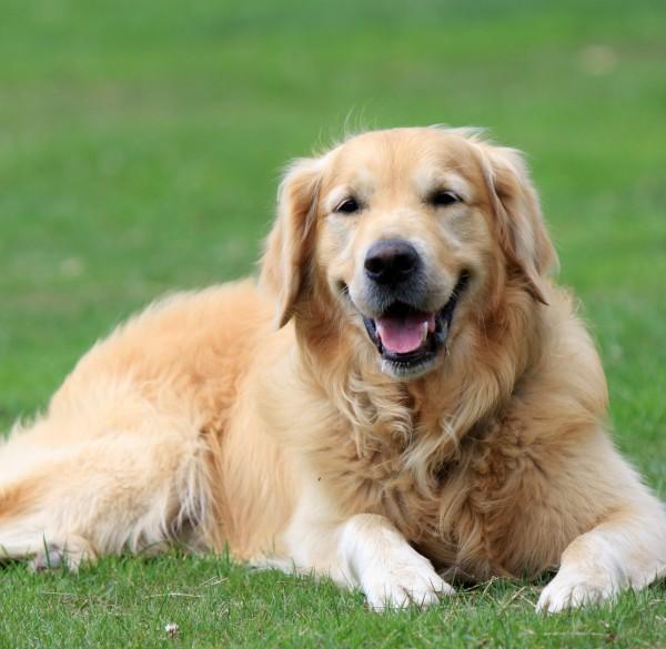 犬を販売しているお店で購入。気を付けたい7つのポイント