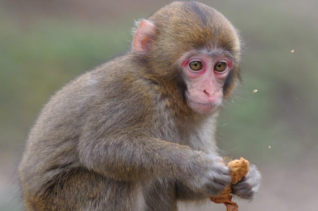 猿はペットに向いてない?実は難しいその飼い方と接し方
