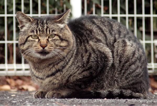 捨て猫を飼う時に、絶対知っておきたい飼い方の注意点