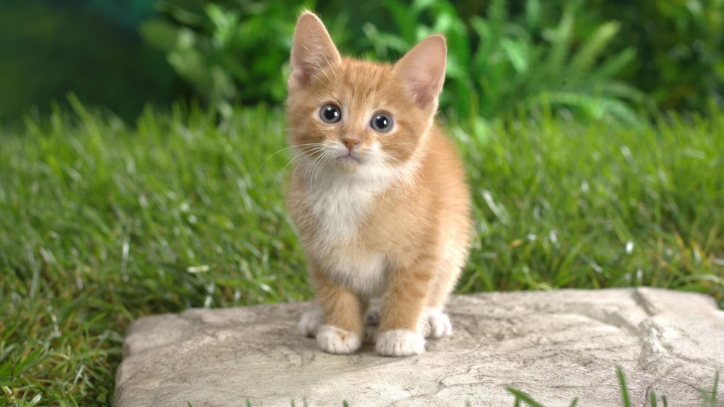 仔猫と一緒に暮らすときに気をつけてあげたい7つの事