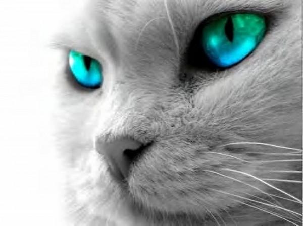 猫の飼い方で注意してほしい7つの基本事項とは