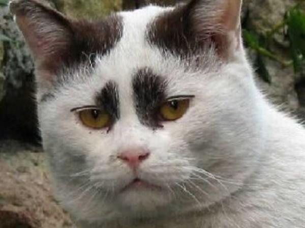 猫が便秘になったときに気を付けてあげたい7つのこと