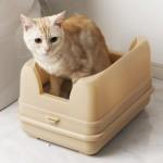 猫のトイレの選び方!種類別に7つの視点で解説します☆