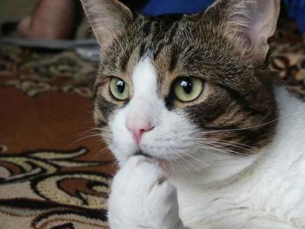 猫の正しいしつけ方。仲良く暮らす説得術