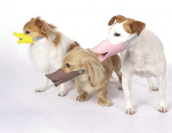 次世代犬用品はコレだ。便利になったグッズご紹介