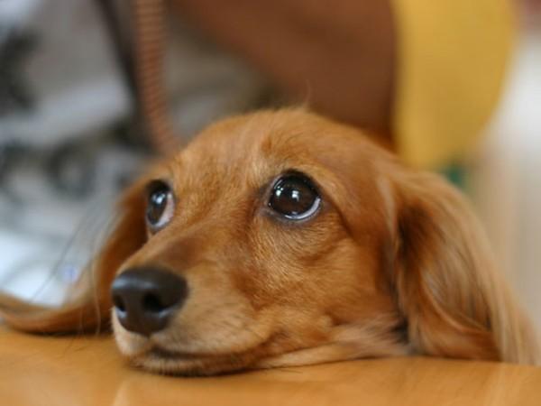 犬のしつけで困っているあなたへ!7つのヒント教えます☆