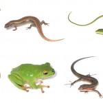 爬虫類をペットにするならお薦めの7種類