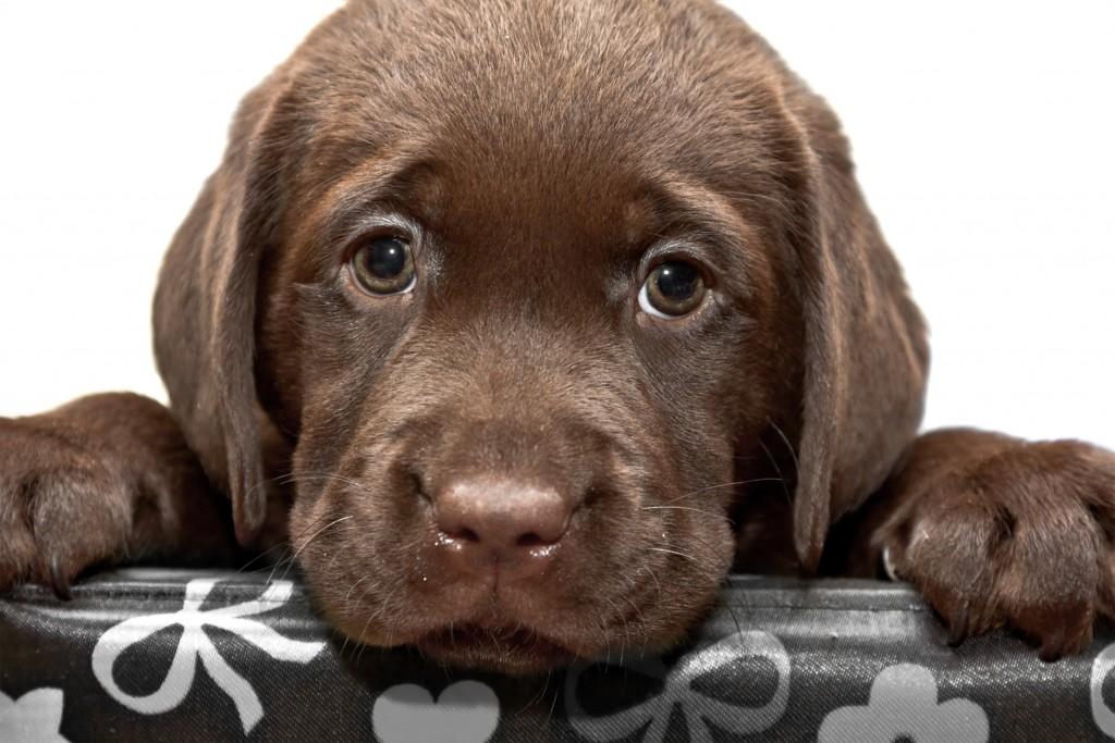 ペット葬儀社の上手な選び方。葬儀内容や注意点を解説!
