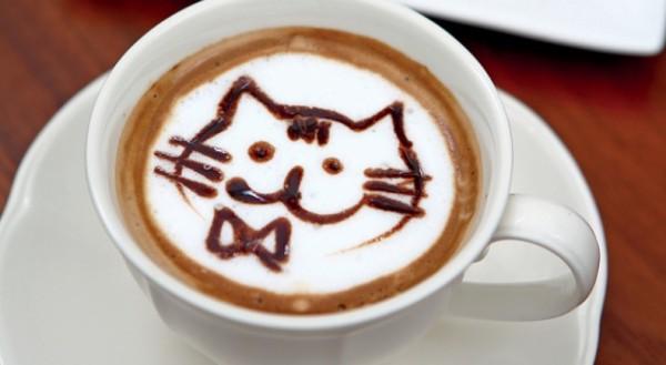 猫カフェなら名古屋近辺がおススメ。店舗の特徴ご紹介