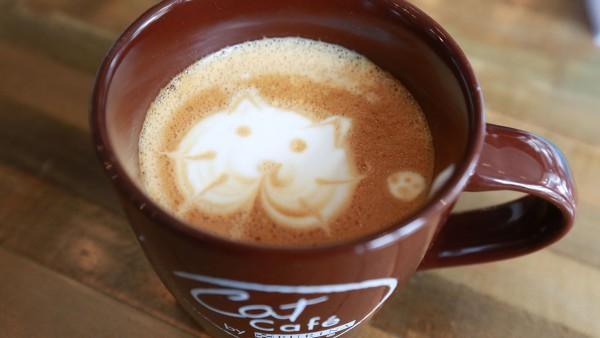 猫カフェに行くなら横浜がおススメな7つの理由