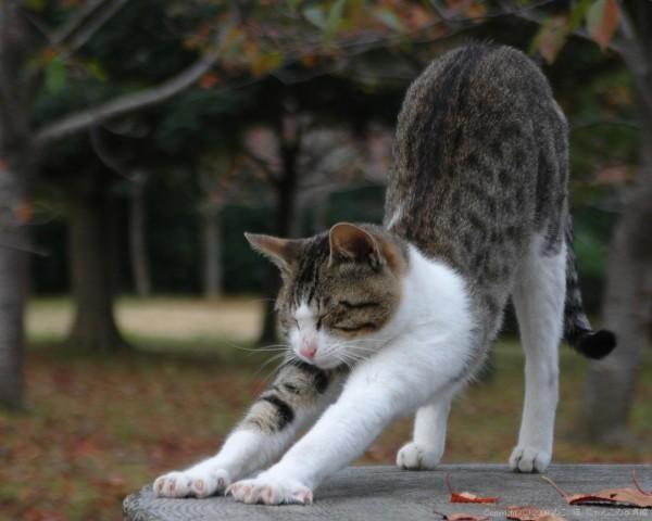 猫の性格を知って、あなたにぴったりのペットにする秘訣!