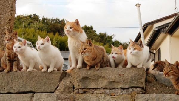 猫の名前ランキングを使って複数猫に命名しよう!