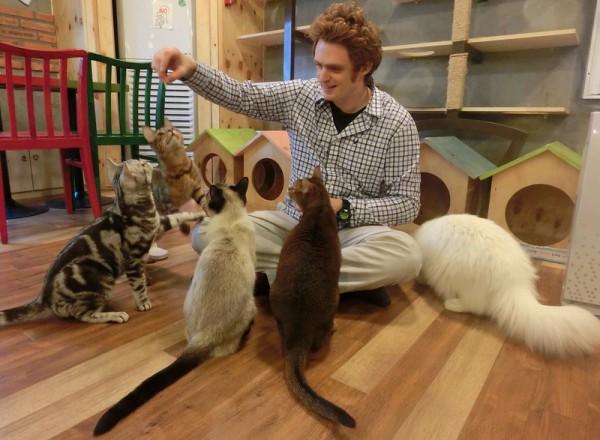 猫カフェ行くなら東京近郊がおススメ!その理由
