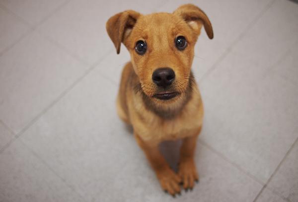 犬のしつけ教室、料金や内容は?良質な場所を見極めるコツ