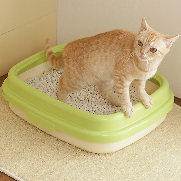 猫砂は性格別に分けると家が汚れにくい!その理由とは