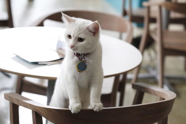猫カフェに行くなら大阪へ行こう。人気店をご紹介