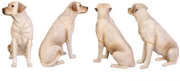 犬のしつけは自分で出来る。徹底したい7つの基本事項