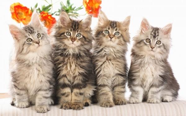 猫の名前に悩んでる人集まれ~名付けへの7つのヒント