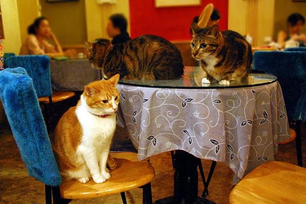 猫カフェ行くなら東京近郊がおススメな理由とは