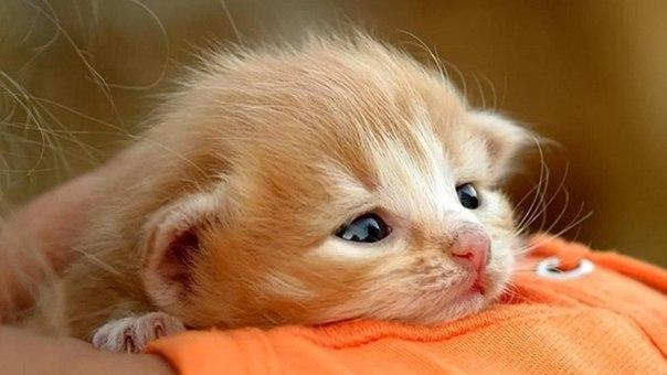 去勢をすることで猫がおとなしくなる7つの理由とは