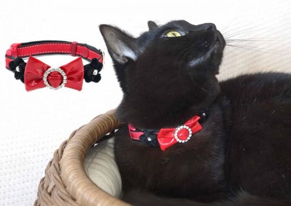 猫の首輪をつける時に気を付けてあげたい7つの事