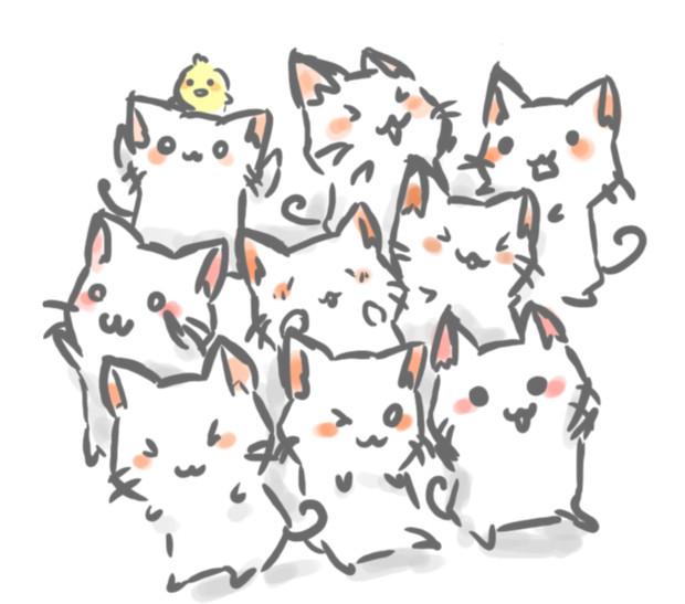 猫の種類を画像でご紹介★知らなかったこんな猫あんな猫
