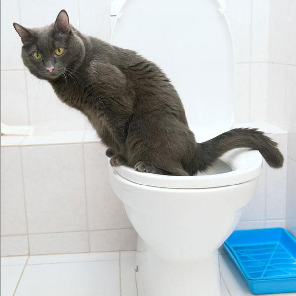 猫のトイレはこんなに種類がある!画像もつけてご紹介