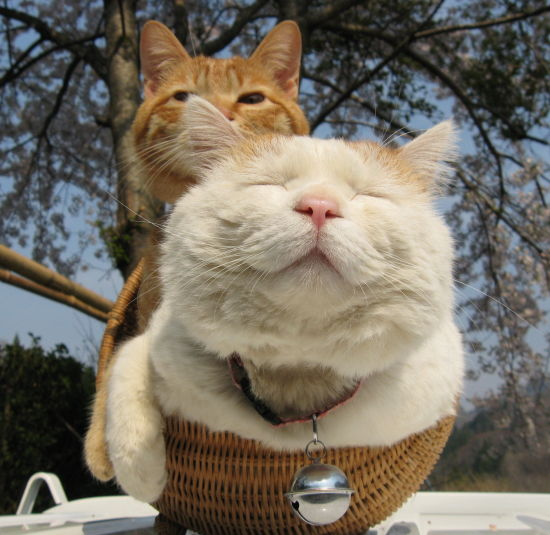 猫の写真を上手に撮る方法を7つの角度でご紹介
