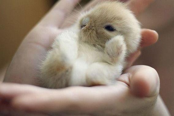 小動物のペット、一人暮らしでも飼いやすいお勧め7種☆