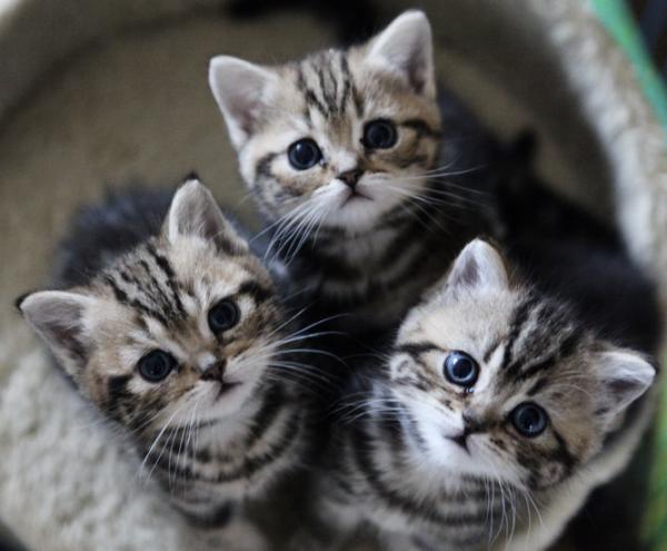 猫のブリーダーになりたい人が知っておくべき知識とは?