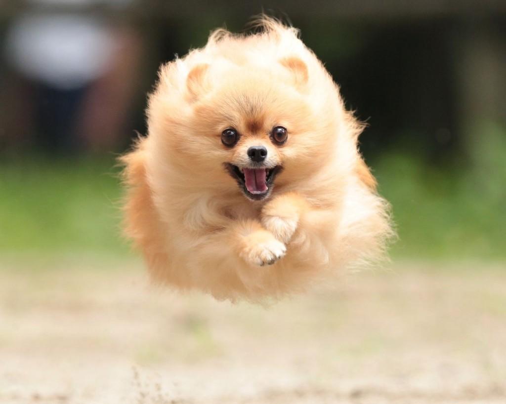 犬の病気でよくあるものから珍しいものまで画像で紹介