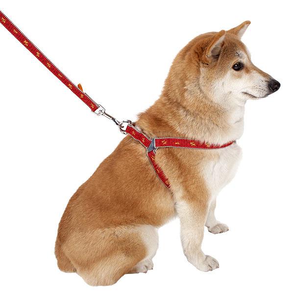 ハーネスを使って犬を上手に散歩出来るようにする訓練法